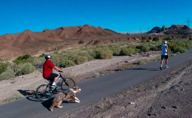 Bike Leash Buddy for Dogs