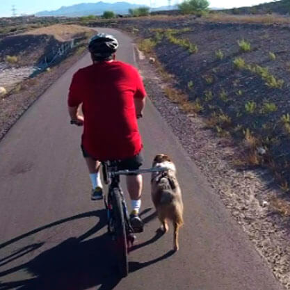 Bike Leash Buddy for Dog Safety