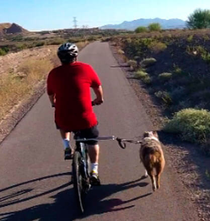 Bike Leash Buddy for Dog Control